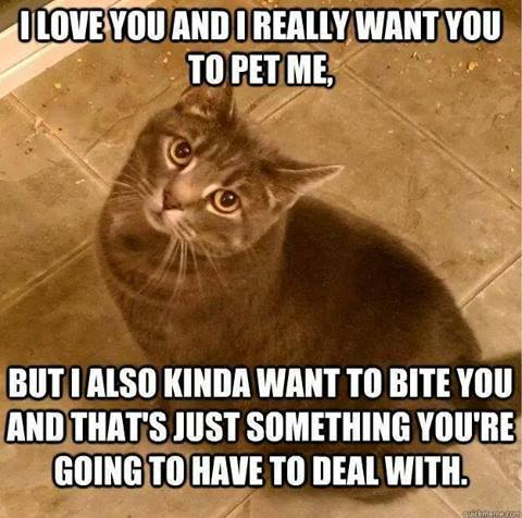 catownerproblems i love you and i really want you to pet me but cute cat humor