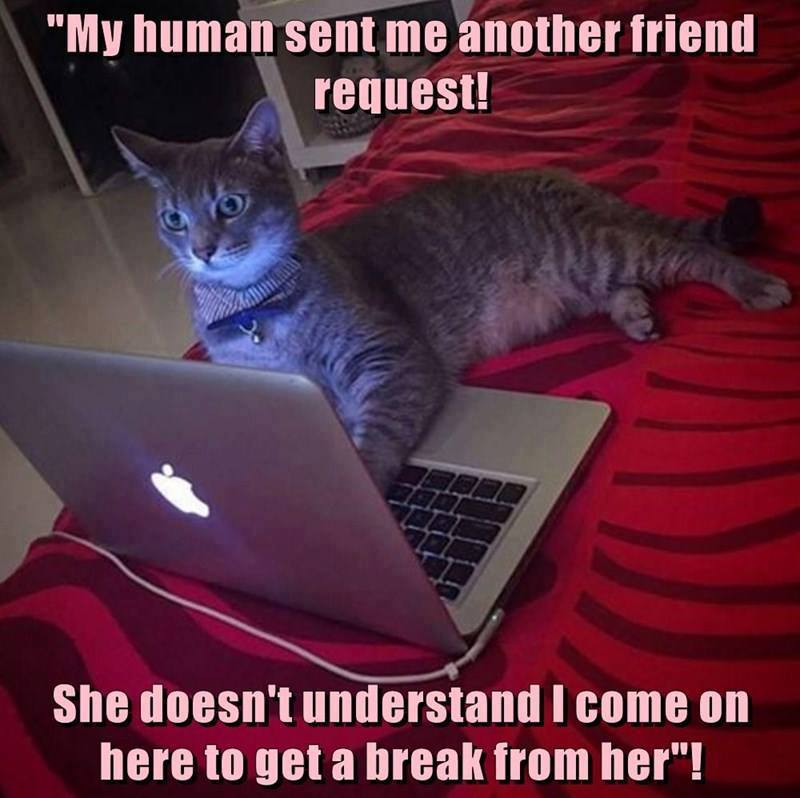 The Problem With Teenage Cats Funny Pet Humor Cute Cat Meme