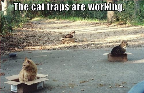 Funny Cat Meme About Work : The cat traps are working funny cat meme cute pet humor lol