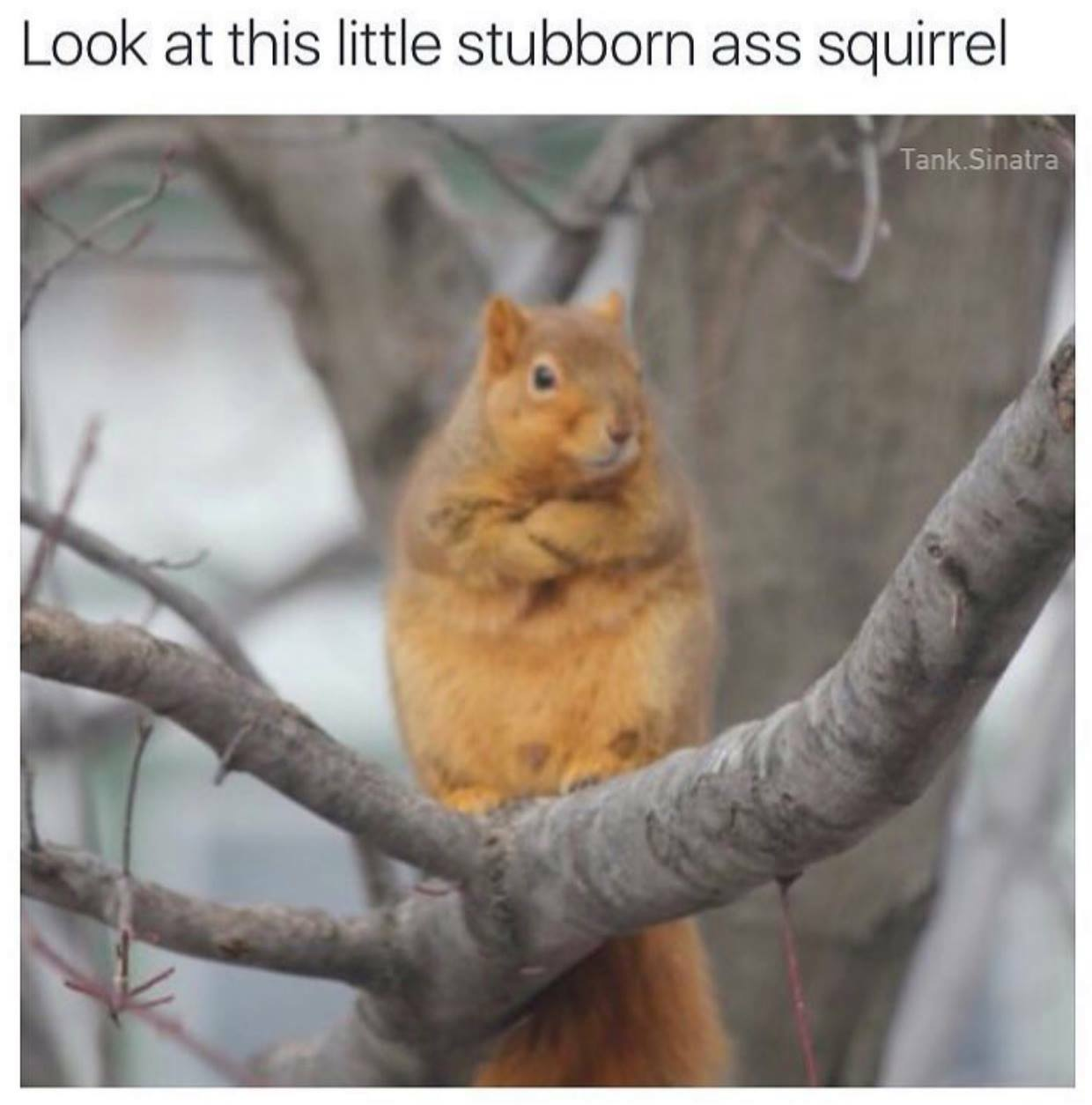 14114961_1243400802400626_1514699761825751251_o what's this guy's problem? cute animal meme funny humor
