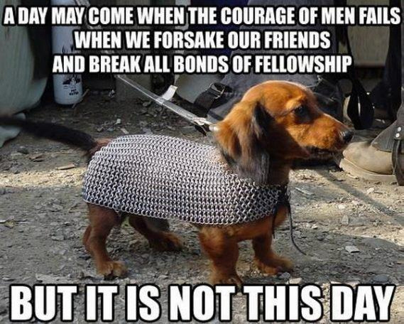 Fun Dog Meme : When your pet whips out their lord of the rings costume #lotr #movie