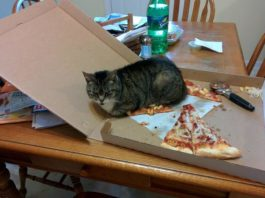 funny-cat-meme-my-pizza