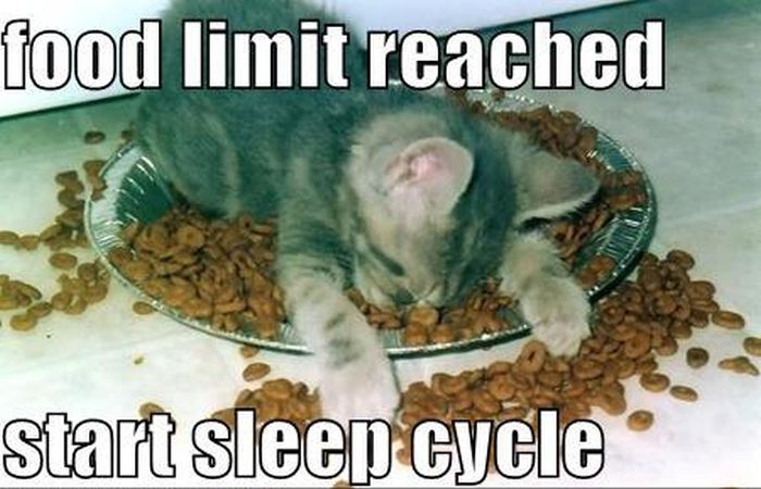 Funny Memes For Weekend : After thanksgiving weekend #funny #pet #humor #cute #lol #meme