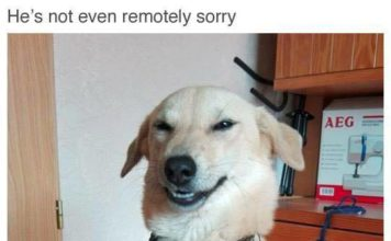 not-even-remotely-sorry