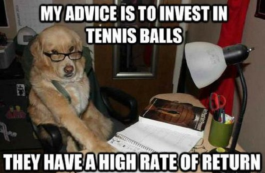 008 dog memes start the new year with some sound investment advice funny pet
