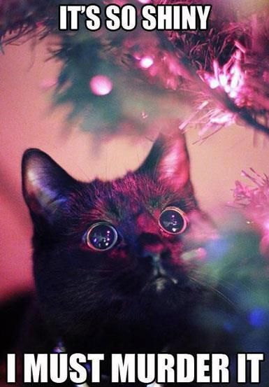 025 FUNNY CAT MEME my cat over the holidays \