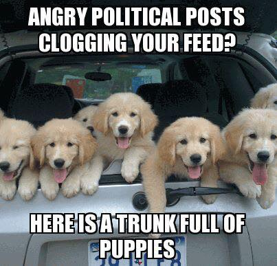 16195750_1421768467847650_1197465560452309833_n angry political posts clogging your feed? here are some puppies
