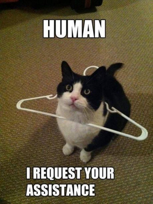 cat in hangar human, i request your assistance funny animal meme cute pet