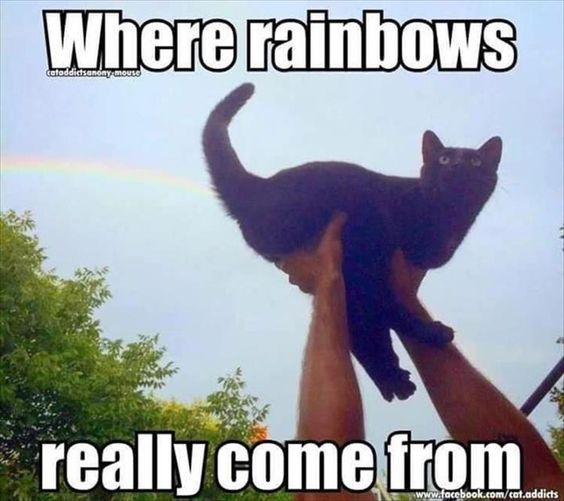 where rainbows really come from funny humor lol meme humor