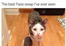 best-face-swap-ever